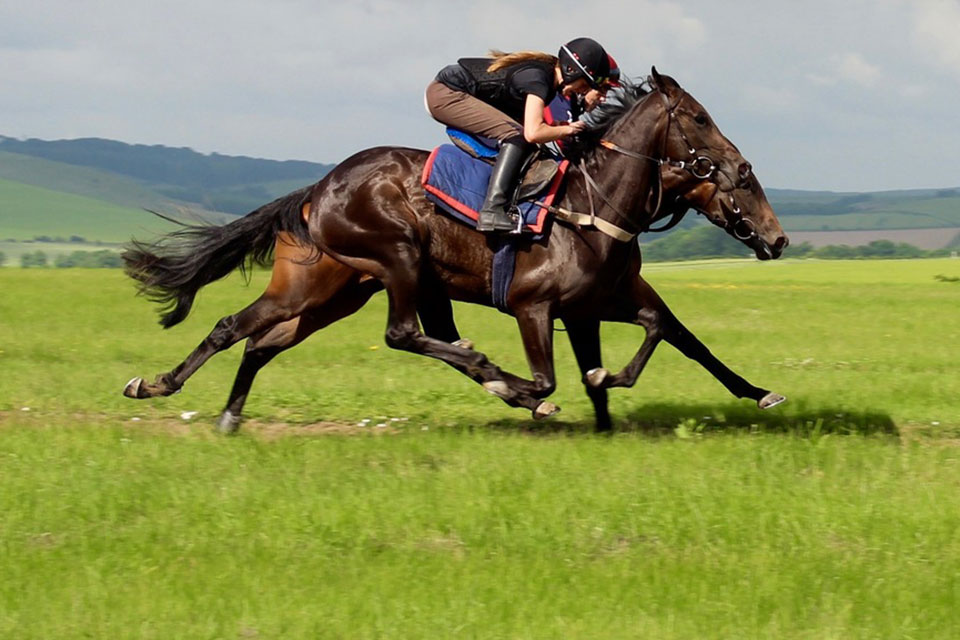 Lambourn Gallops